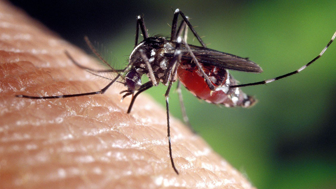 West Nile Found in Holt County